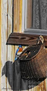 Home Tweet Home by Lorraine Louwerse