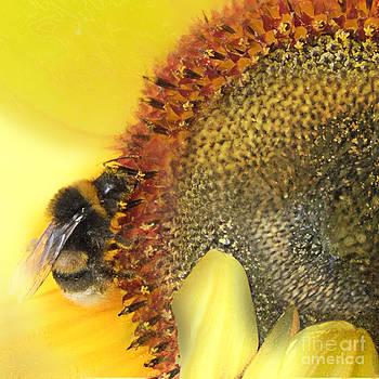 Honey bee by Anne Weirich