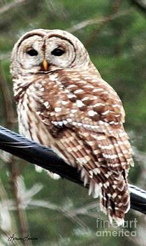 Hoot Owl 2 by Lorraine Louwerse