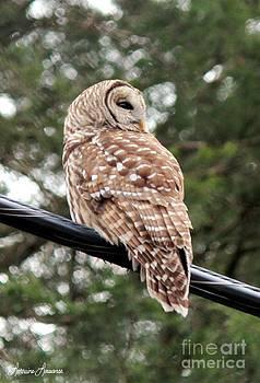 Hoot Owl 3 by Lorraine Louwerse