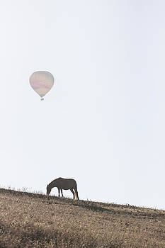 Horse and Balloon 2 by Chris Fullmer
