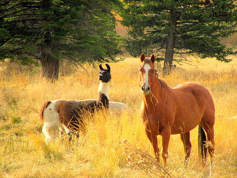 Horse and Lama by Amy Bradley