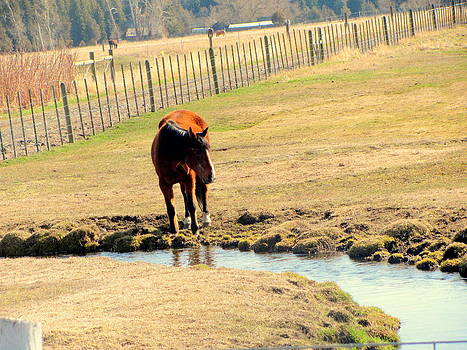 Horse and Pasture Creek by Amy Bradley