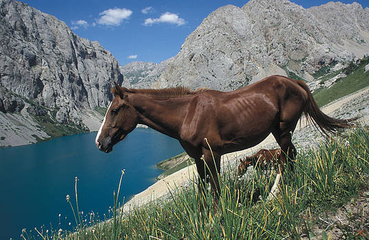 Horse at the lake by Michal Cerny