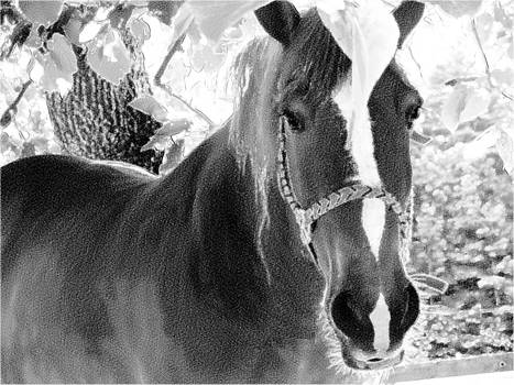 Tammy Bullard - Horse black and white pencil