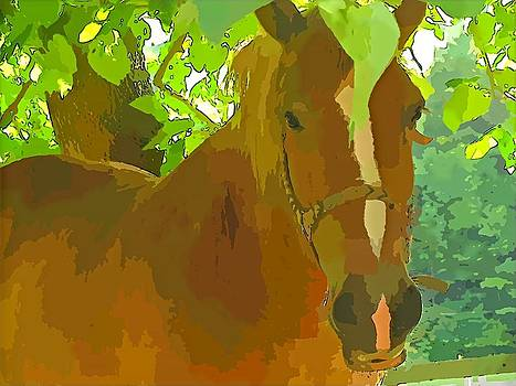 Tammy Bullard - Horse Cartoon Image
