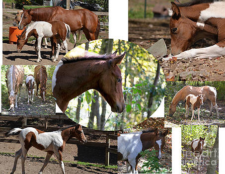Horse Collage by TommyJohn PhotoImagery LLC