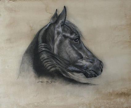 Horse Drawing I by Omar Garza