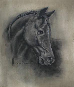 Horse Drawing II by Omar Garza