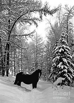 Horse by Elena Filatova