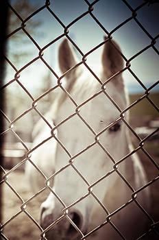 Horse by Ewa Kuc