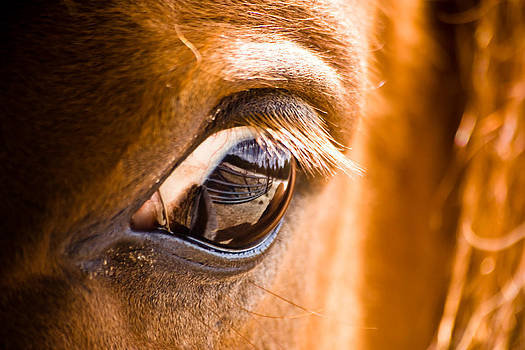 Horse Eye Reflection of Gate by Jeramie Curtice