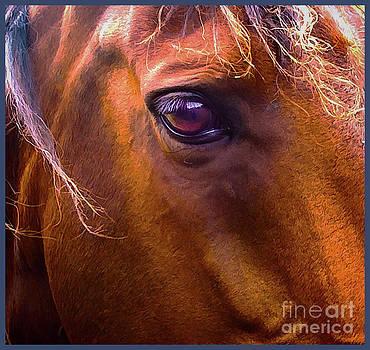 Horse Eyes by James  Dierker