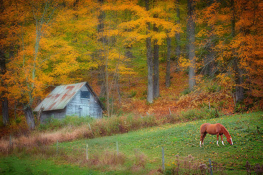 Horse Grazing in the Fall 3763  by Ken Brodeur