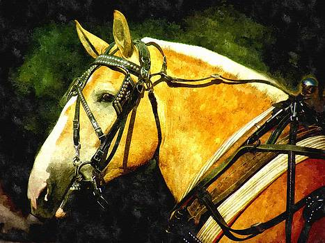 Horse in Paint by Amanda Struz
