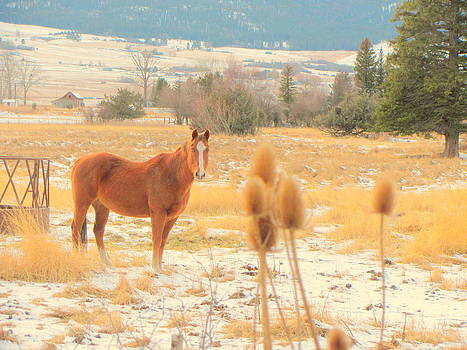Horse in Pasture  by Amy Bradley