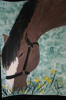 Horse by Jamie Mah