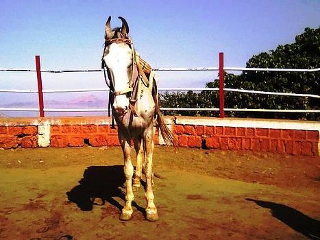 Horse by Mamta Joshi