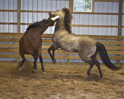 Horse Play by Dean Bennett