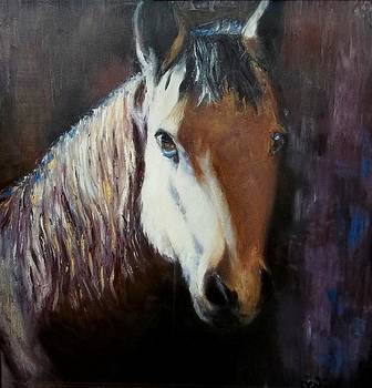 Horse Portrait I by Terri Meyer