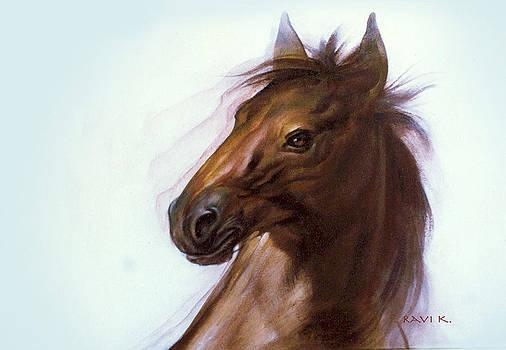 Horse by Ravindra Kajari