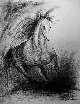 Horse  by Shankhadeep Bhattacharya