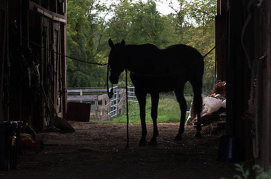 Horse silhoutte by Cheryl Cencich