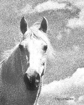 Horse sketch by Penny McClintock