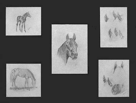 Horse Study by Alethea M