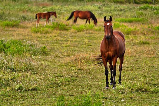 Matt Dobson - Horse With No Name