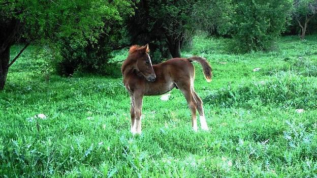 Reli Wasser - Horses-3