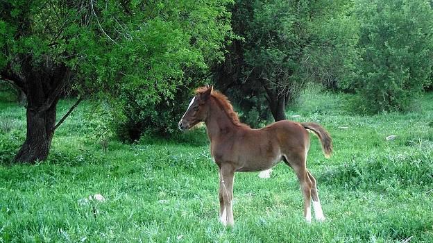 Reli Wasser - Horses-4