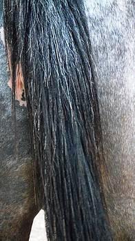 Reli Wasser - Horses-7