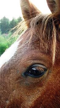 Reli Wasser - Horses-8