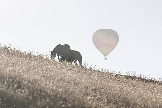 Horses and Balloon 1 by Chris Fullmer