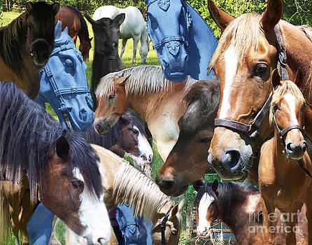 Anne Ferguson - Horses