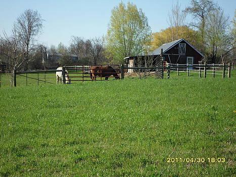 Horses at The Farm by Emily Lambert
