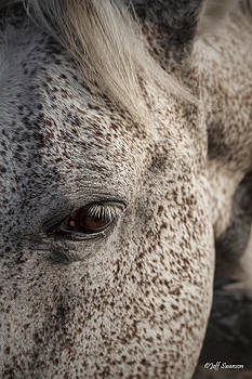 Horse's Eye by Jeff Swanson