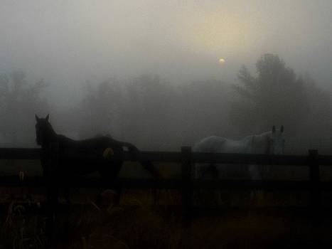 Horses In Fog by Esther Luna