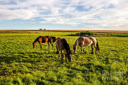 Horses in the Sunset by Bodo Herold