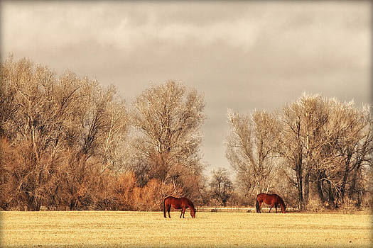 Horses by Lisa Kidd