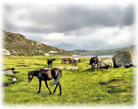 Horses of Wyoming by Tom Schmidt