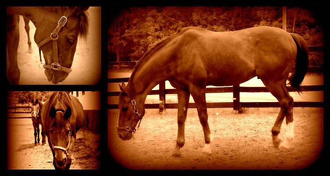 Rebecca Frank - Horses