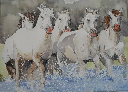 Horses thru water by Teresa Smith