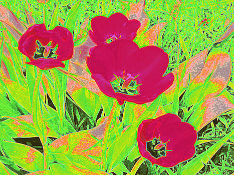 Hot Pink Tulips 1 by Tracy Daniels