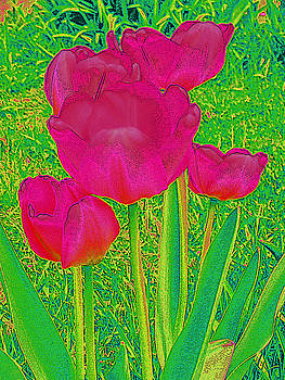 Hot Pink Tulips 2  by Tracy Daniels