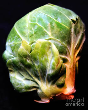 Anne Ferguson - Huge Brussel Sprout