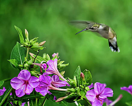 Humming Along by Michael Putnam