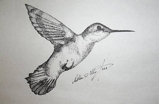 Humming Bird by Matthew Wright