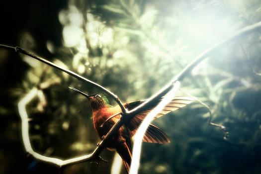 Humming Bird by Stuart Deacon